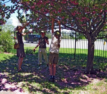 Shaking the Cherry Tree