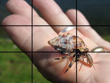 A little Hermit Crab demonstrating the Rule of Thirds (with lines drawn in) - Jan Messersmith