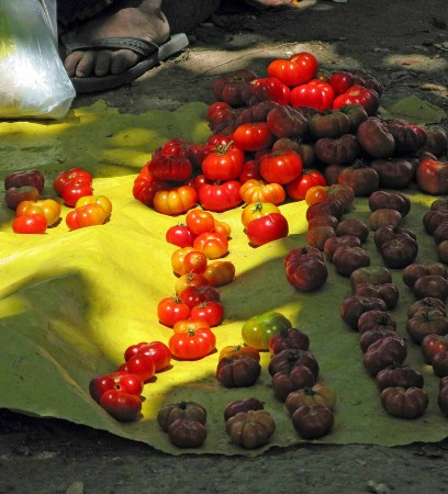 Sweet, sweet tomatoes at the market in Madang, Papua New Guinea