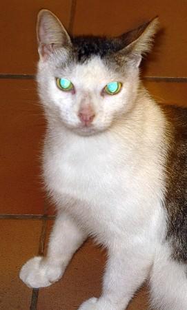 Felis domesticus - Alien agents?