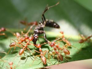ants-bug-300x225