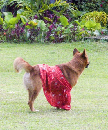 A red dog in a red dress