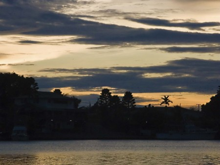 Flying foxes over Madang at sunrise