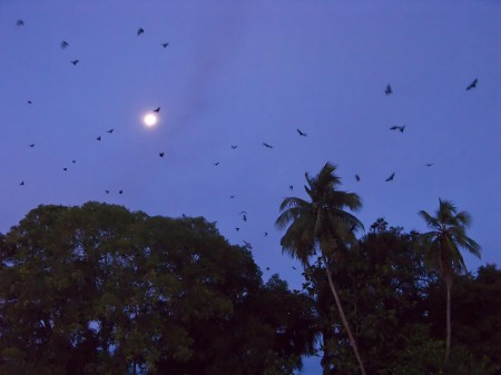 The twilight features a coconut tree, the moon, and flying foxes
