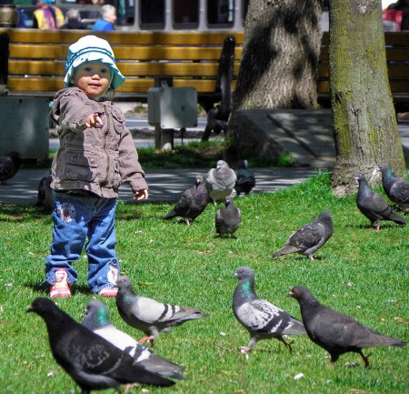 Cute little girl with pigeons - the way it should look