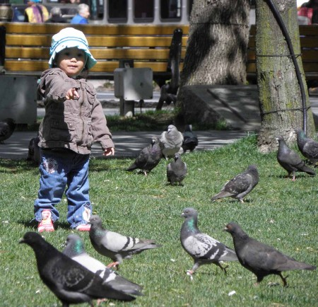 Cute little girl with pigeons - bad shadows and distracting cables