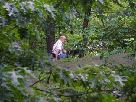 Central Park - heaven in the city for man and dog alike