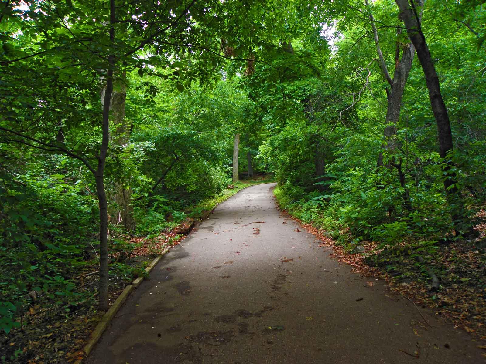 [Obrazek: nyc_central_park_path_p6100270.jpg]