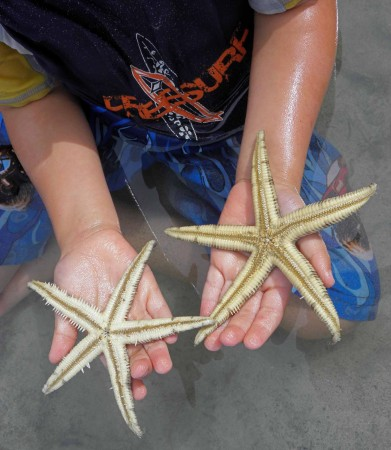 Keyan finds a couple of starfish