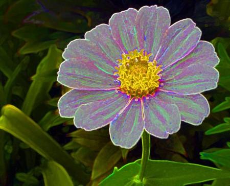 """""""Venusian Daisy"""" composite"""