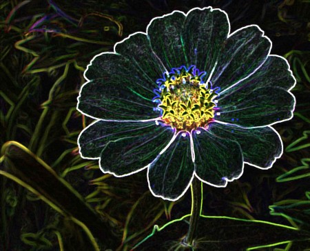 Daisy with Glowing Outline filter applied