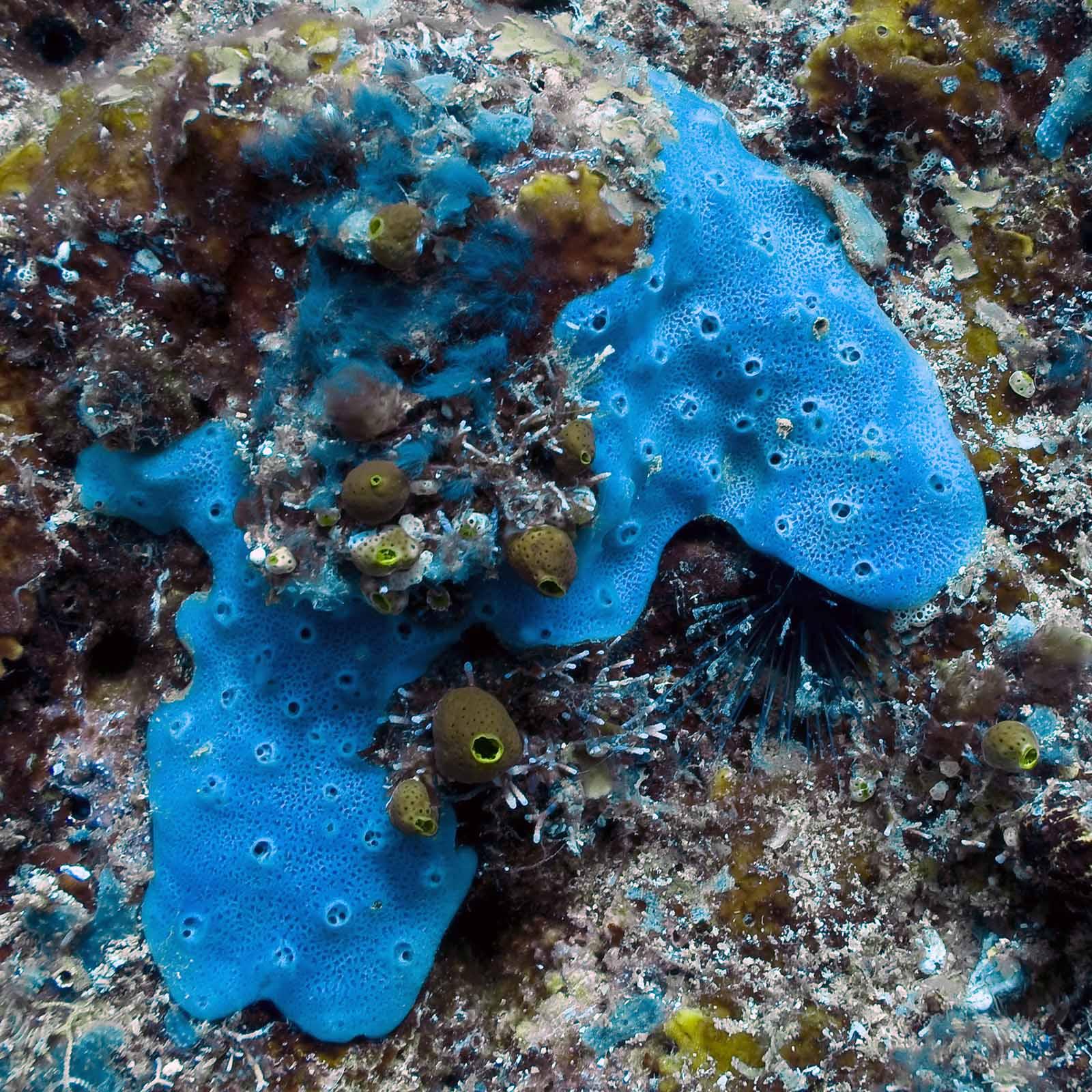 Звуки - подводный мир 3